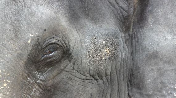 "Lakshmi was tortured to blindness because she was hungry and ""stole"" her mahout's food"