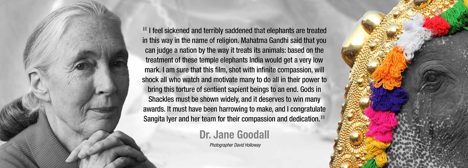 godsinshackles-janegoodall-endorsement