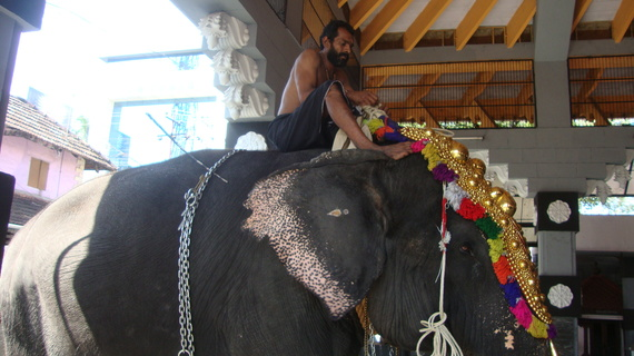 This is Lakshmi in November 2015, getting ready for temple rituals