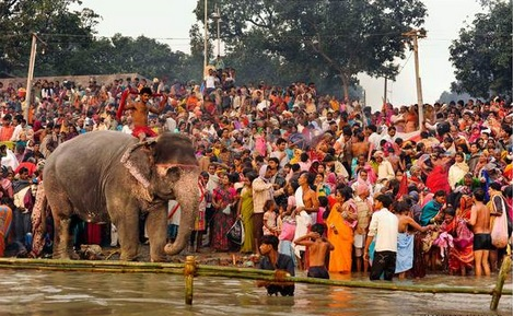 India's Elephants Are Celebrated as Icons but Tortured in