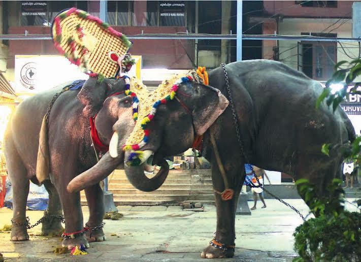 Thiruvambadi Sivasundar Left And Paramekkavu Sree Padmanabhan Which Are Expected To Carry Thidambus